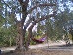 Liegestuhl im Garten, entspanung im Schaten