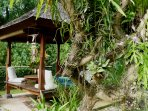 Bale, the Balinese pavilion. For massage, for watching the animals......