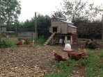 Free range chickens and Indian runner ducks live here!