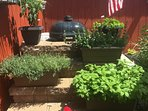 Lots of fresh herbs, hot peppers and plants