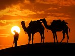 Sunset view from the desert with camel safari