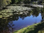 Lilly pond that was designed by Frederick Law Olmstead provides a peaceful view
