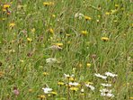 Cornriggs  SSSI Wild flower meadows full of bees ,butterflies ,birds ,even some times Black Grouse