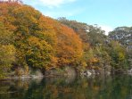 Autumn Leaves in Lewis Cove