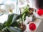 Apt CT1 - Orchids