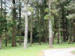 Woodland View