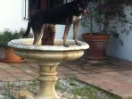 Anka, our friendly dog, looks for her own fresh bath