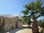 Large palm tree behind the villa