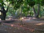 Seating area under Mango trees