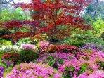 Blackheath Rhododendron Garden