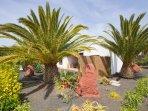 Exotic Canarian garden