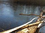 Des balades en foret au bord de lacs...