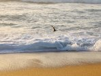 View of bird's playing while walking on the private beach