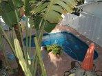 Pool, Resort, Swimming Pool, Water, Tree