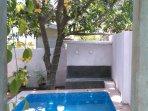 Plunge pool under the mango tree