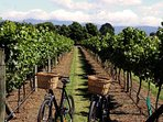 Niagara on the Lake is famous for bike rides to over dozens of wineries in the area