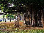 Kapiolani Park is close, and a great place to relax with the Banyan trees!