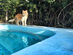 Pool with cat.