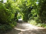 The canopied track on part of the Clarendon Way, only yards from Badgers Lodge.