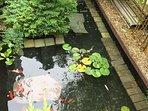 Koi pond in the garden.