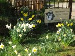 Spring flowers - we have over 10 types of daffodil in our gardens.