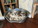 Dog Friendly with Dog beds