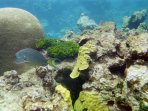 diving and snorkeling are terrific!
