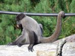 Monkey World - a great day out for all the family