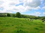 Peaceful farmland of the Gwaun Valley