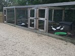 Some of our ducks and chickens here.