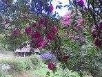 Cotehele Gardens, e passeggiate