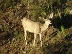 Enjoy the wildlife.  Corn provided to feed deer.  Also a Hummingbird feeder and bird feeder.