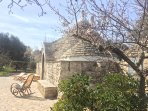 The Trullo is surrounded by olive and fruit trees