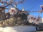 The trullo cones and almond blossom