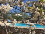 The view of the pool though the spring blossom