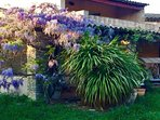 Villa Cicada - The Exterior