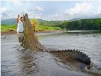 Crocodile river tours less than 30 min away