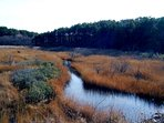 Tranquility of the marshes in the Fall.