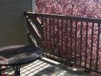Private Balcony- Morning Sun