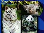 Quelques animaux du zoo de Beauval