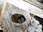 Whooo is this Jupiter Farms Resident? Owl don't know!