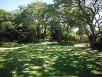 Garden in full summer shade