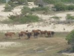 HORSES SEEN FROM TOP DECK 4/22/17