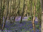 Bluebell woods nearby.