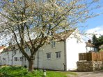 THE COTTAGE, white washed cottage, open fire, lawned garden, parking, in