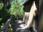Deck, Porch, Fir, Forest, Grove