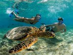 Snorkel with the turtles.