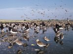 RSPB Snettisham car park is just a 5 minute walk from us, so perfect accommodation for twitchers