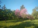 Fruit trees in the upper meadow