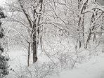The winter forest from the balcony